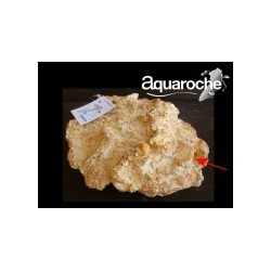 503944 grotte Murène 25cm